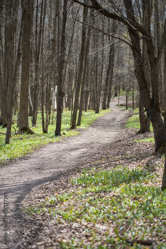 Hiking path through the woods on a spring day in Ontario, Canada.