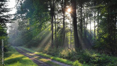 Fotografija Früh Morgens wenn die Sonne durch die Blätter scheint im Herbst mit Nebel