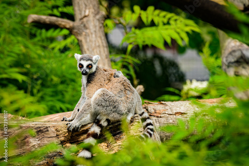Fototapeta premium zoo animals, zoo, animals, wild animals, elephant, alligator, panda, red panda, monkey, rhino, birds, kangaroo, lizard, agave, turtle, giraffe, meerkat, elephant