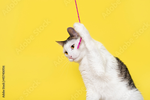 Cuadros en Lienzo Funny cat playing with pink thin rope isolated on yellow background
