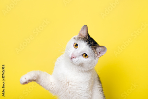 Fotografía Funny cat playing and cat catching something with its paw