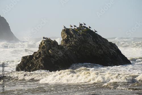 Gulls Sitting On Sea Stack With Waves Crashing
