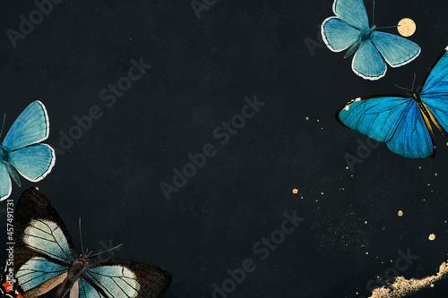 Fototapeta Blue butterflies patterned on black background vector