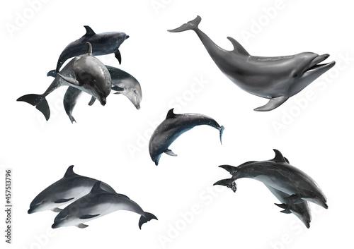 Fotografie, Obraz Beautiful grey bottlenose dolphins on white background, collage