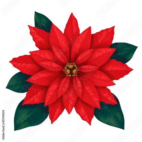Fotografie, Obraz 鮮やかな赤い葉っぱのポインセチア 線画なし