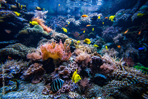 Coral colony and coral fish.  Underwater view Poster Mural XXL