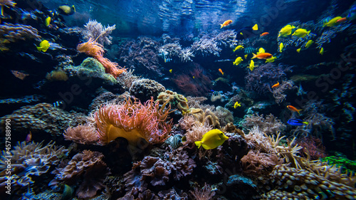 Fotografia Underwater view of the coral reef