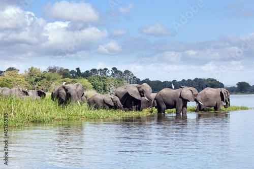 Obraz na plátně Troupeau d'éléphants d'Afrique (Loxodonta africana) sur une rive du lac Malawi