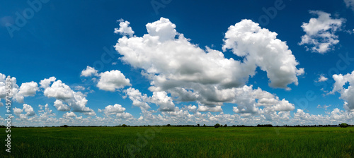 Fotografie, Obraz Panorama Landscape Of blue Sky clouds Background over Rice fields And Paddy fields landscapes on a bright sunny day with patterns formed in natural background