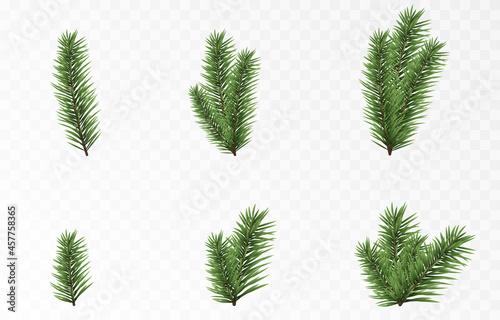 Obraz na plátně Set of vector fir branches