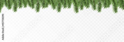 Fotografie, Obraz Vector fir branches