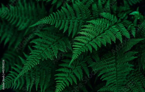 Canvas Print Perfect natural fern leaves in a dark and moody feel