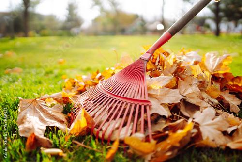 Fototapeta Rake with fallen leavesin the park