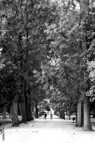 Canvastavla camino en parque