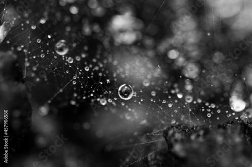 Fototapeta Raindrops on a spider web