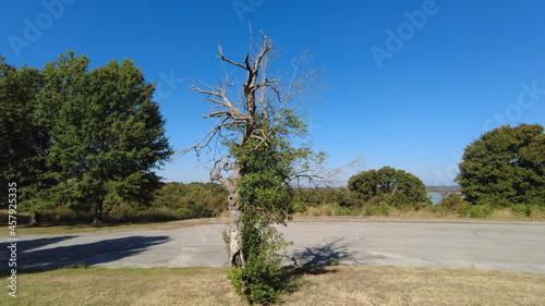 Fotografie, Obraz Angst Dead Resurrected Life in Death Oak Tree Ancient Green Limbs Crooked Generi
