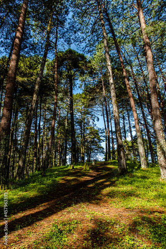 Canvastavla Vertical shot of pathway amidst tall trees on the hillside