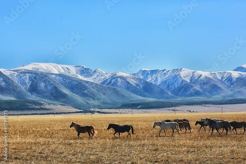 Photo Altai mountain landscape, panorama autumn landscape background, fall nature view