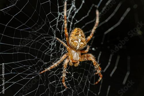 Cuadros en Lienzo spider on a web