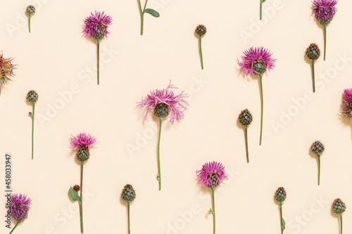 Fotografia Natural summer composition from wild flowers thorn thistle or burdock on pastel beige background