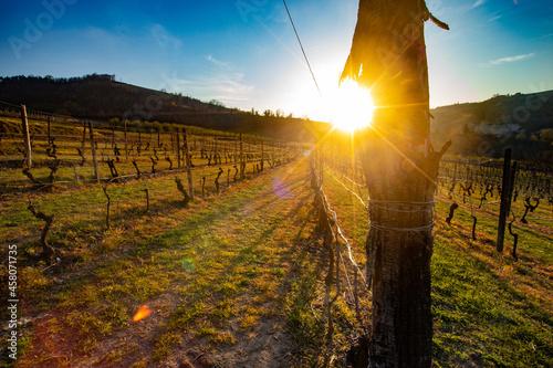 Foto Vigne - Paesaggio - Piemonte - Langhe - Mango - Italia