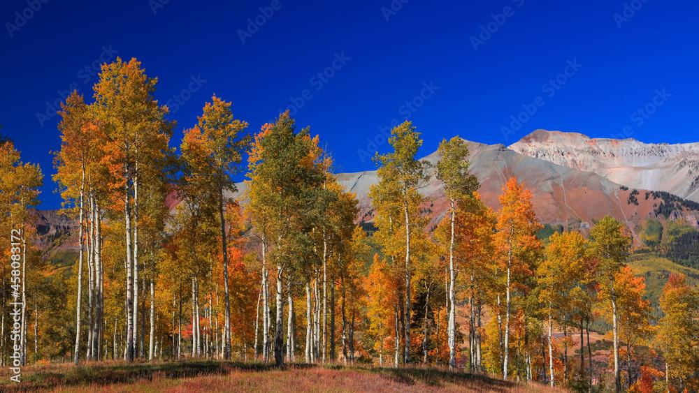 Bright autumn trees on slopes of San Juan mountains near Telluride