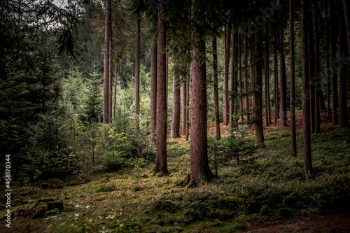 Tall trees and plants in the Bavarian Forest Fototapet