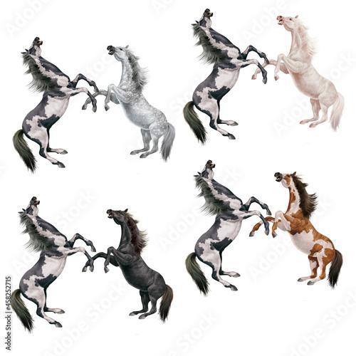 Fotografie, Obraz cheval, combat, animal, illustration, cavalier, art, saut, sauvage, étalon, équi