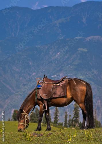 Fototapeta Horse Standing On Field Against Mountains