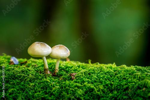 Obraz na plátně Close-up Of Mushroom Growing On Field