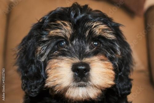 Fototapeta Close-up Portrait Of Dog