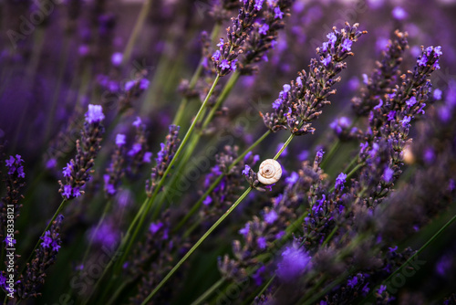 Obraz na plátně Close-up Of Insect On Purple Flowering Plant