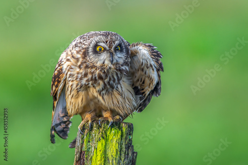 Owl Staring With Sharp Eyes While Perched On Old Wooden Post With Bright Green B Fototapete