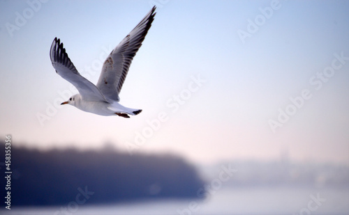 Canvas Print Seagull Flying Over The Sea Against Sky