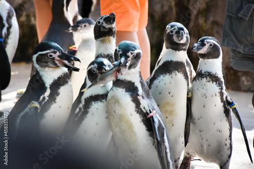 Close-up Of Penguins Fotobehang