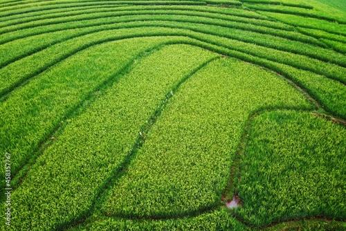 Fototapeta Aerial Panorama Of Agrarian Rice Fields Landscape