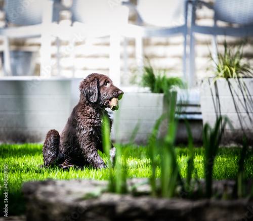 Foto Dog Looking Away Outdoors