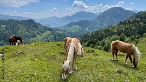 Fotografie, Obraz Horses On Meadow In The Mountains