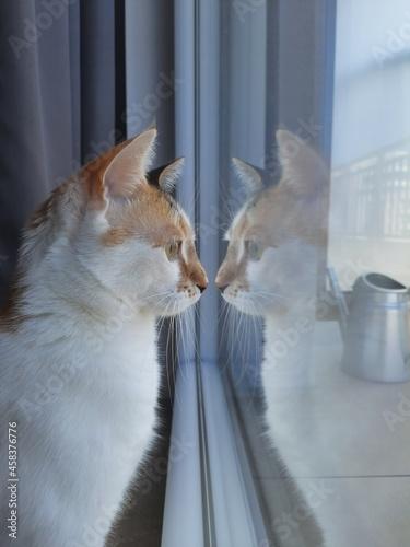 Obraz na plátně Cat Looking Through Window