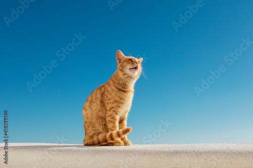 Canvastavla Santorini Stray Ginger Cat