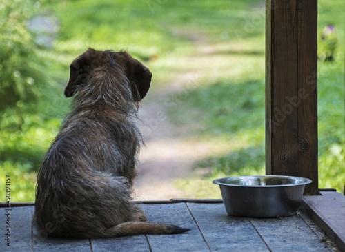 Fototapeta Dog Looking Away While Sitting On Wood