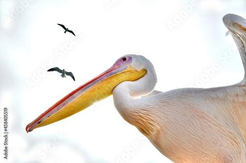 Foto Close-up Of Pelican