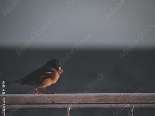 Foto Little Bird
