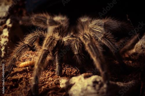 Fotografia, Obraz Close-up Of Spider On Field