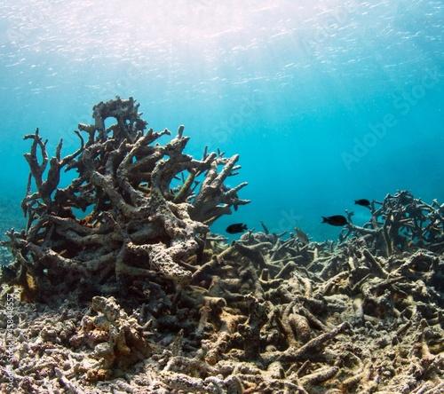 Fotografie, Obraz Fish Swimming In Sea
