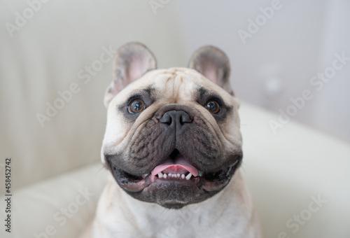 Fotomural Portrait Of A Dog