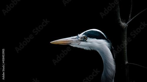 Fotografía Close-up Of A Heron