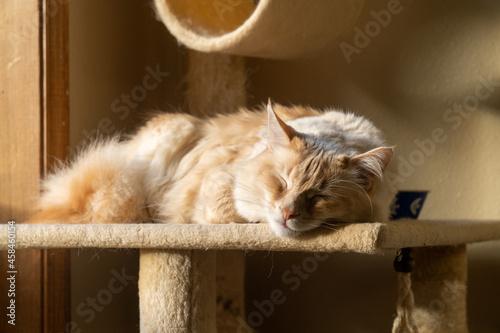 Fotografie, Obraz Cat Sleeping