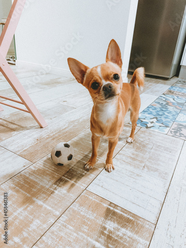 Obraz na plátně Portrait Of A Dog With A Ball