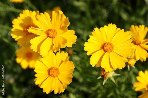 Obraz na plátně Close-up Of Yellow Flowering Plants On Field
